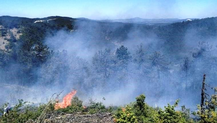 Tavşanlı'daki orman yangını kısa sürede söndürüldü