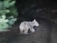 Ormanda dolaşan off-road ekibinin önüne ayı çıktı