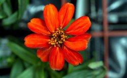 Kwiat wyhodowany w kosmosie