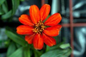 kwiat_z_kosmosu