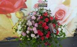 Która róża jest najpiękniejsza?
