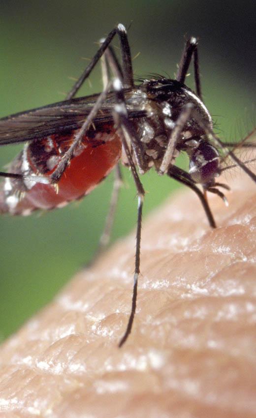 Jak się bronić przed komarami bez chemii?