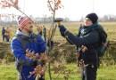 300 nowych drzewek na Osiedlu Łąkoszyn
