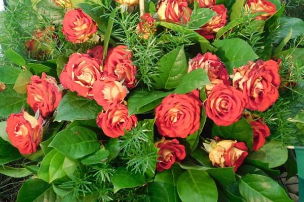 Święto Róży 2018: Róża jest kobietą i konkursy różane
