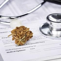 Lecznicza marihuana: pacjenci chcą, lekarze nie znają