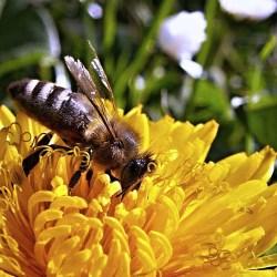 Rolnicy i pszczelarze apelują: nie koście trawników!