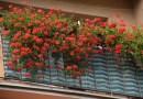 Konkurs na najpiękniejszy balkon i ogródek przydomowy