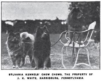 1920 a Stlvania kennel chowi