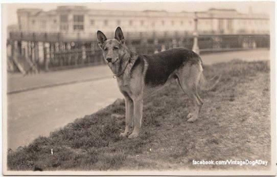 1926 Német Juhász