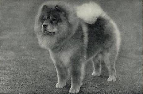 1934 chow