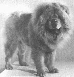 1940 chow-chow