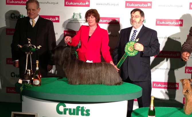 Skye terrier crufts 2013 group winner