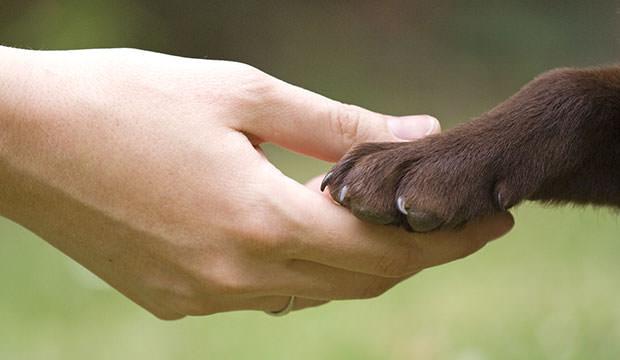 Egy kutya élete végéig feltétel nélkül fog szeretni Téged