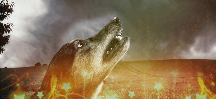 A tűzijáték és a kutya