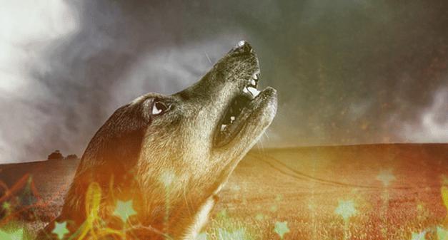A tűzijáték és a kutyák