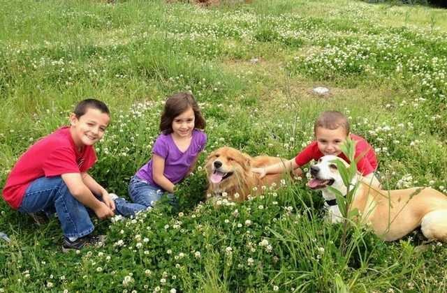 A kutya segítségével a gyermekek elsajátíthatják a szociális készségeket