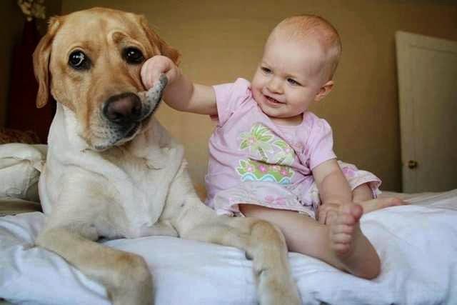 Azok a gyermekek, akik kutyák mellett nőnek fel, ritkábban szenvednek allergiától és asztmától