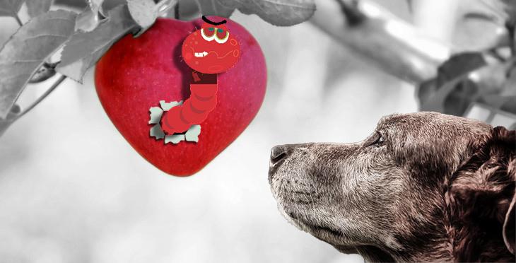 Szívférgesség kutyáknál