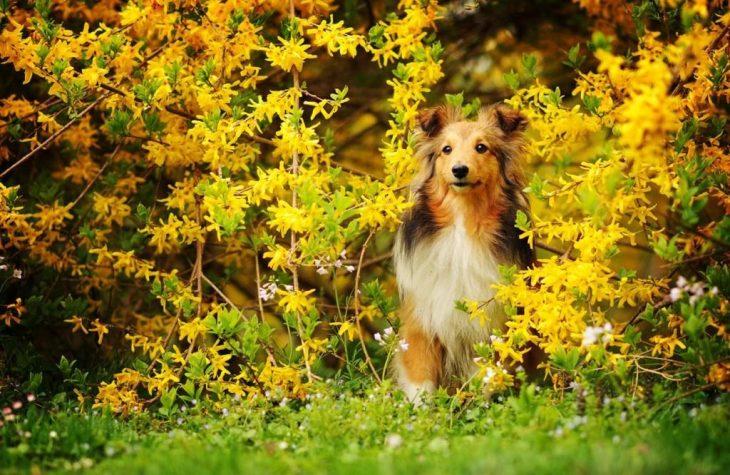 Aranyvirágok ölelésében