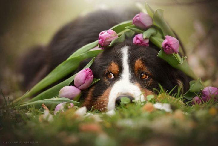 Tavasztündér