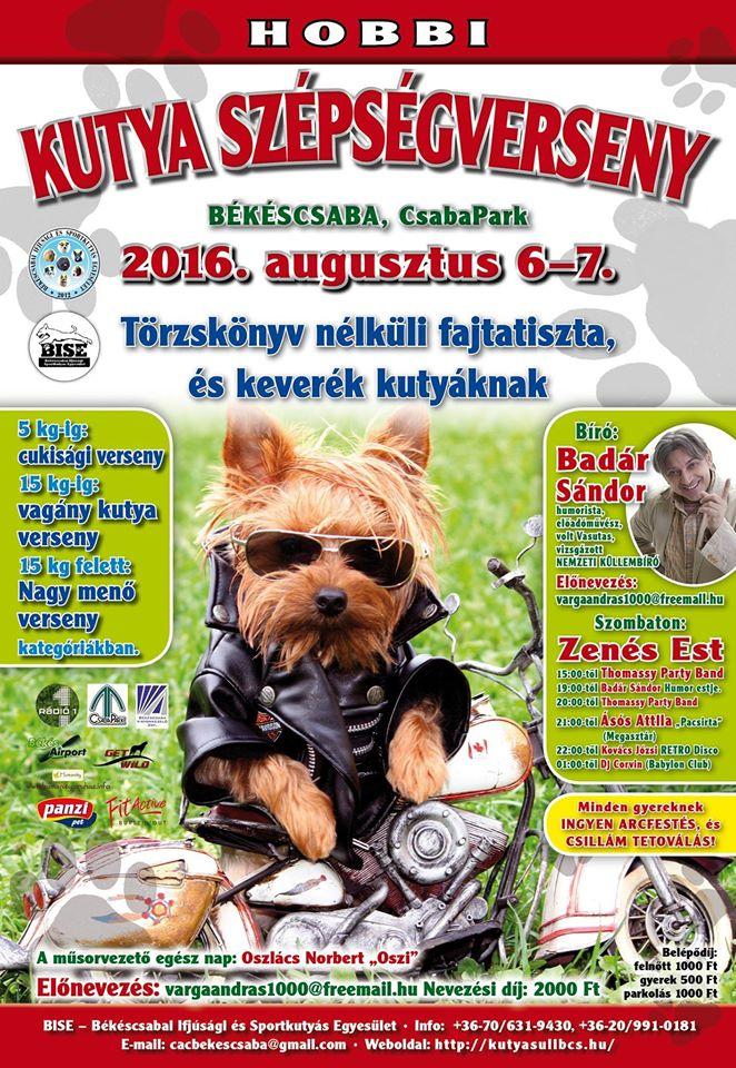 Hobbi kutya szépségverseny