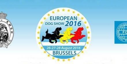 Az Euro Dog Show 34 év után újból szülőhazájában, Belgiumban látja vendégül a kutyás társadalom legszebbjeit