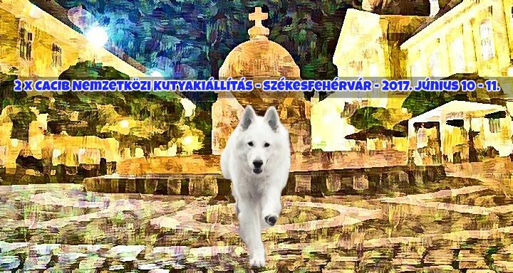 2 x CACIB Nemzetközi Kutyakiállítás – Székesfehérvár – 2017. Június 10 – 11.