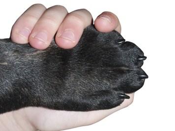 Téli mancsvédelem a kutyáknál