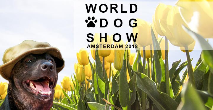 World Dog Show a szélmalmok és a tulipánok országában