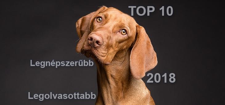 Kutya Portál 2018 TOP 10 – a legnépszerűbb és legolvasottabb cikkek