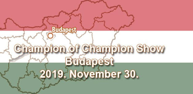 Champion of Champion Show – Budapest – 2019. November 30.