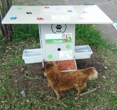 Több városban is helyeztek el ételadagolót a kóbor állatoknak
