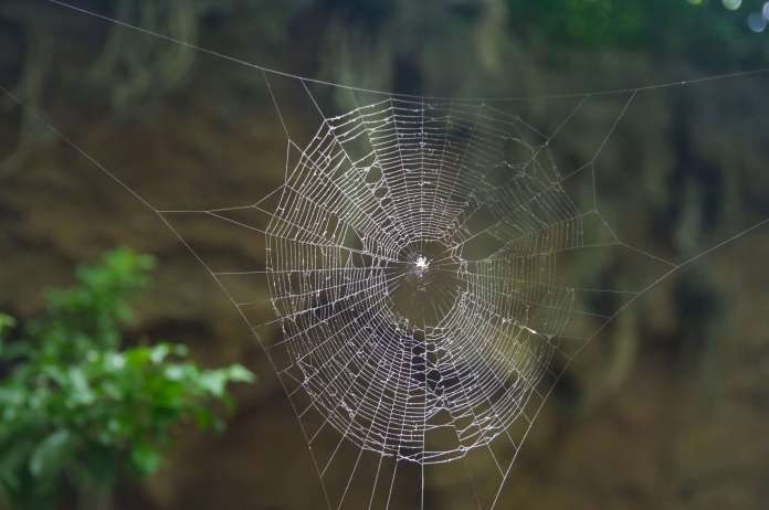 This image has an empty alt attribute; its file name is Spider-Web-Des-Moines.jpg