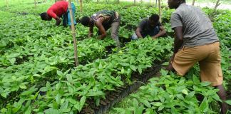 Young people farming