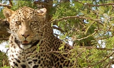 7 Day Program: Serengeti and Ngorongoro Safari
