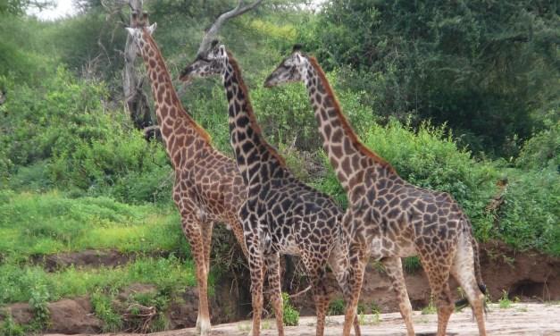 3 Day Tour to Ngorongoro and Lake Manyara