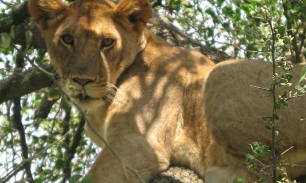 2 Day safari Ngorongoro and Manyara