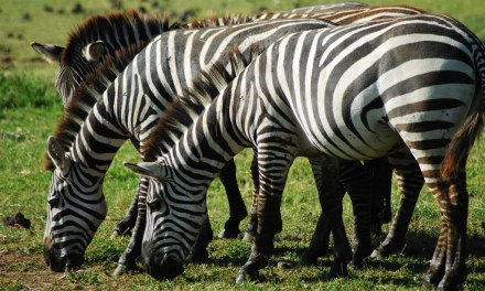 3 Day Ngorongoro Walking Tour