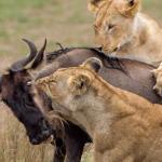 6 Day Camping Safari to Lake Eyasi, Serengeti and  Natron
