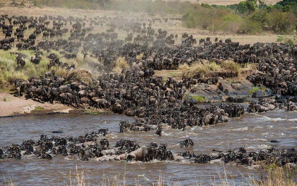 9 Day Program: Serengeti Wildebeest Migration Safari