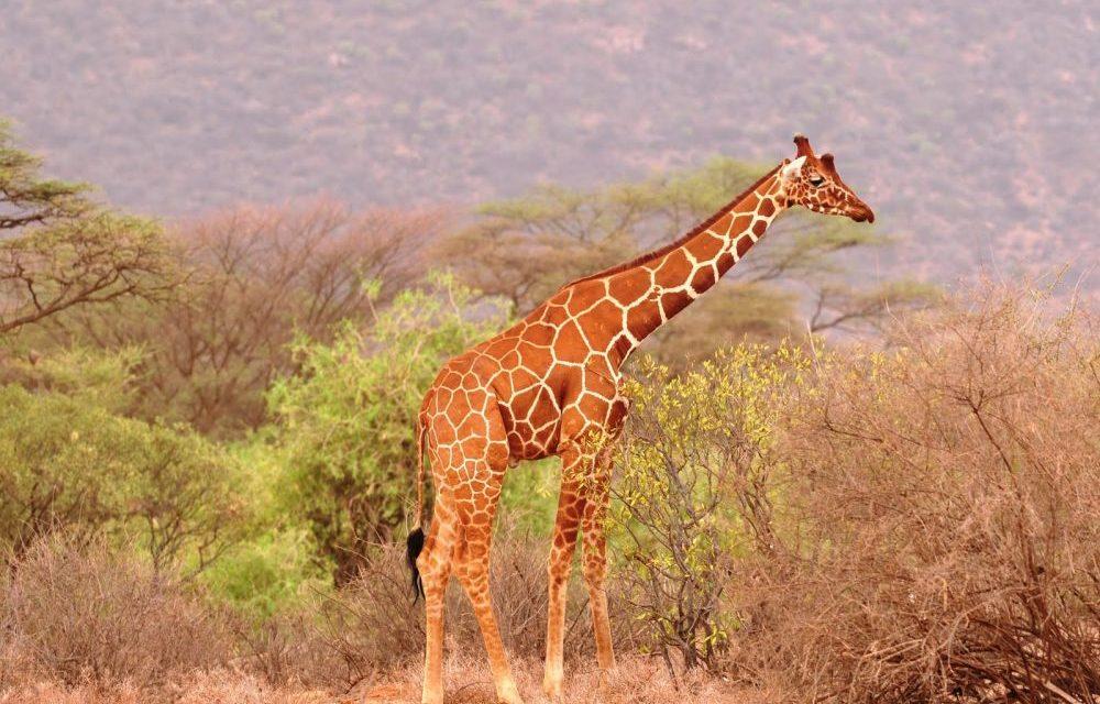15 Days Safari in Kenya, Tanzania and Zanzibar Beach   Holiday