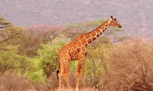 15 Days Safari in Kenya, Tanzania and Zanzibar Beach   Holiday
