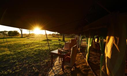 DUNIA CAMP SERENGETI