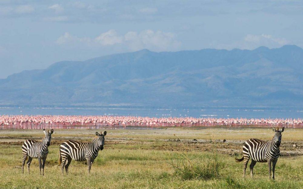 Lake Manyara National Park Day Tour