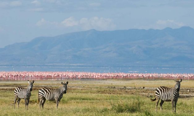 Lake Manyara National Park Day Tour