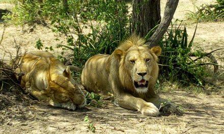 Safari  Zanzibar and Kilimanjaro