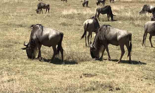 6 Day Tour to Serengeti and Ngorongoro