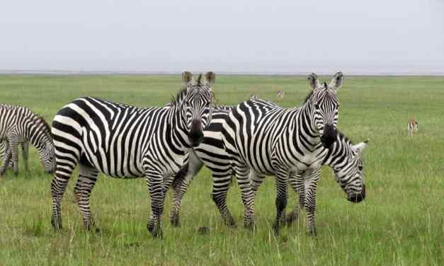 8 Day Adventure in Serengeti-Ngorongoro