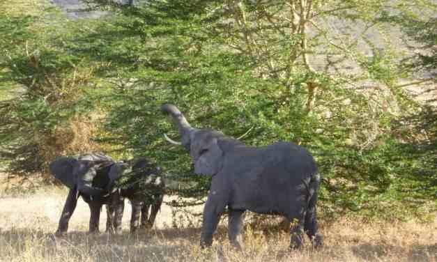 7 day Special Safari Africa Tanzania