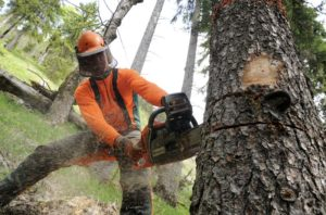日本の林業の弱さ